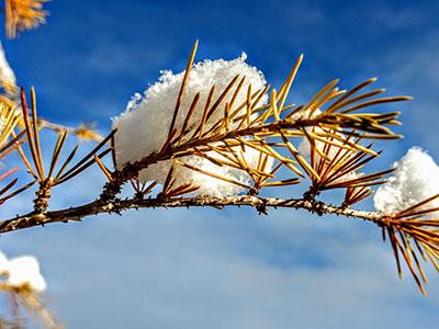 F2346 Clay Snow On Bough Feb 2020