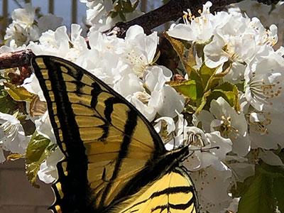 Helen W Butterfly Img 2249