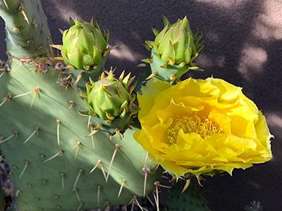 M B Cactus Img 8965