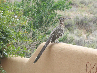 Linda Ledwith, Roadrunner
